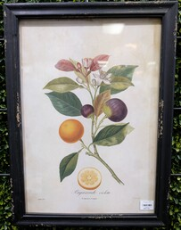 French Country Botanical Wall Art Fig 35x48cm