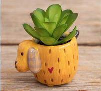 Natural Life Yellow Dog Critter Faux Succulent