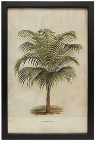 French Country Narrow Leaf Palm Wall Art 45x62cmH