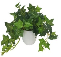 Flower Systems Sage Ivy Potted - White